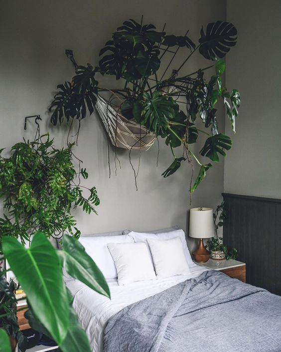 Indoor Garden Idea - Hanging Monstera