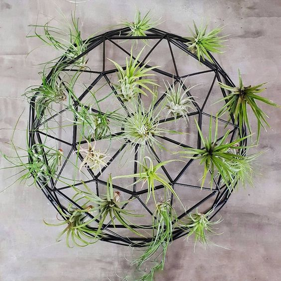 Indoor Air Plant Garden Design Idea