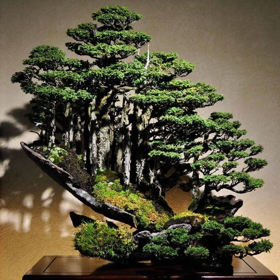 Bonsai forest indoor garden ide