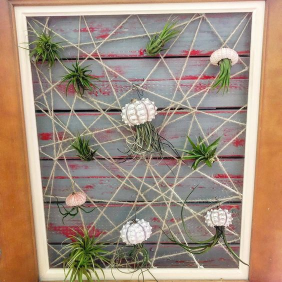 Framed air plant garden