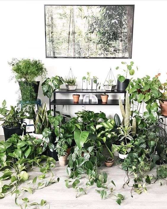 Pothos on the floor garden display idea