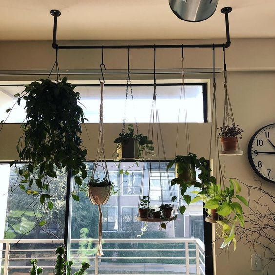 Indoor garden idea - hanging plants