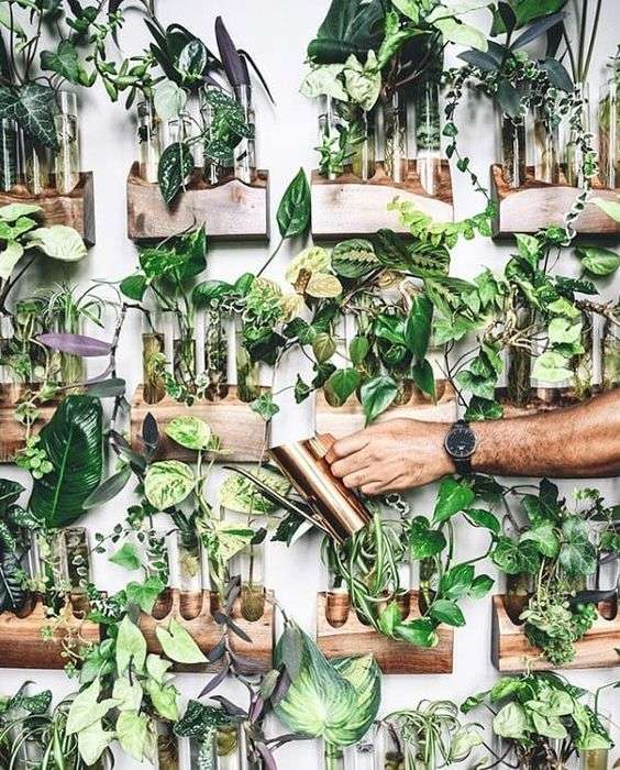 Propagation Wall Indoor Garden Idea