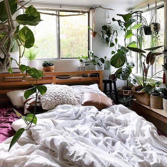 Indoor plants for a cozy bedroom