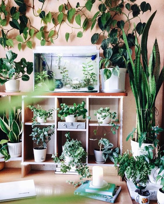 Houseplants for small spaces