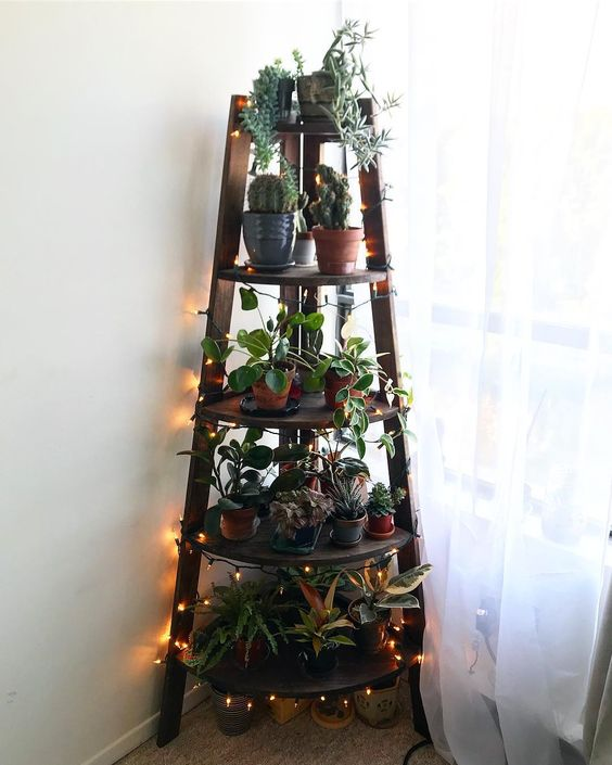 Indoor Garden Idea - Christmas Tree Shaped Plant Shelf