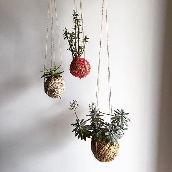 Hanging kokedama garden