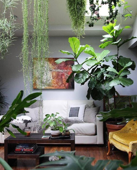 Living Room Hanging Plants