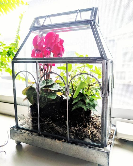 Mini greenhouse idea