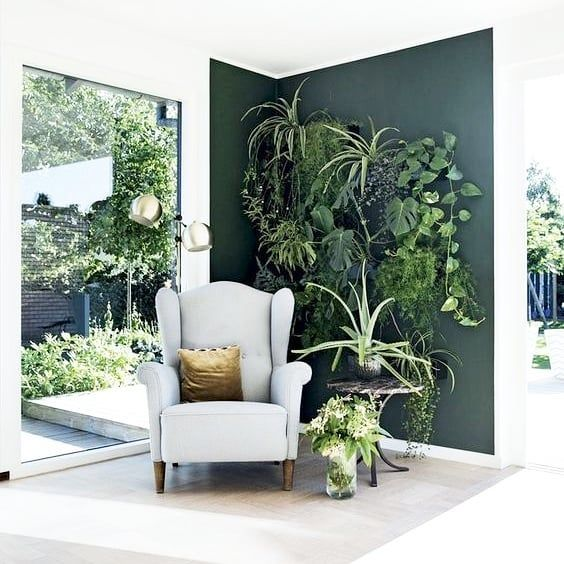 Indoor Plants for Shaded Corners