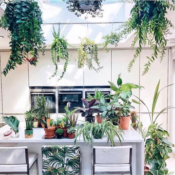 Hanging indoor plants for attics with skylights