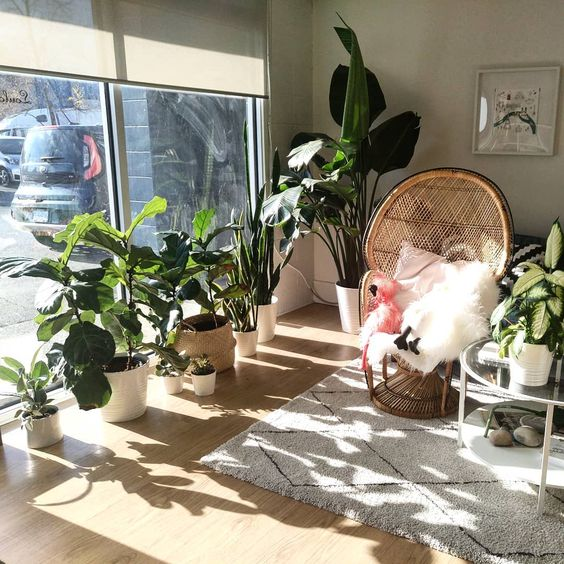 Houseplants for sunny rooms