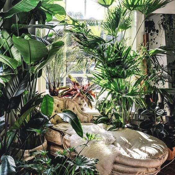 Exotic indoor garden idea