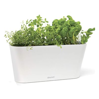 self watering passive hydroponic planter