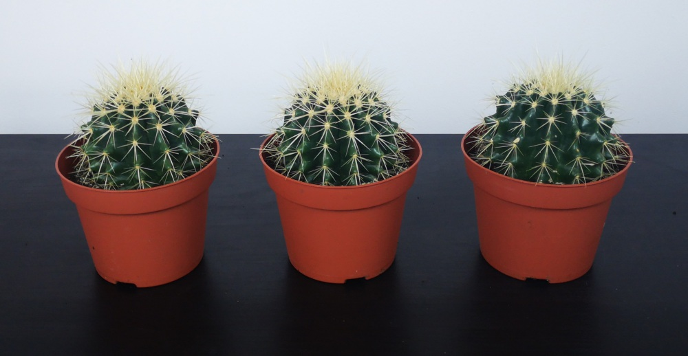barrel cactus - music for plants experiment