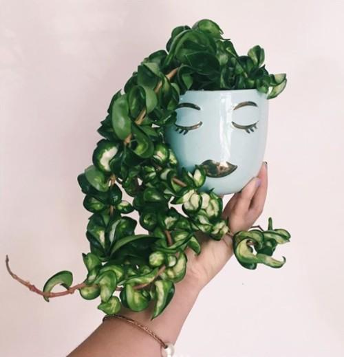 best hard to kill houseplants - hoya compacta