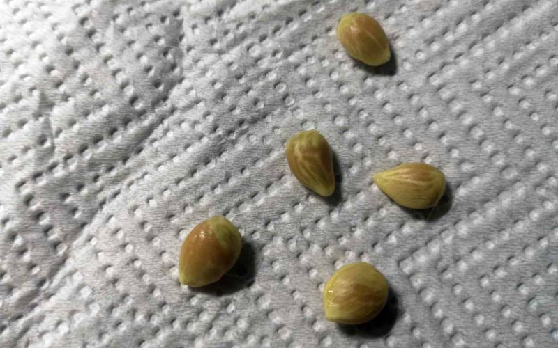fresh lemon seeds