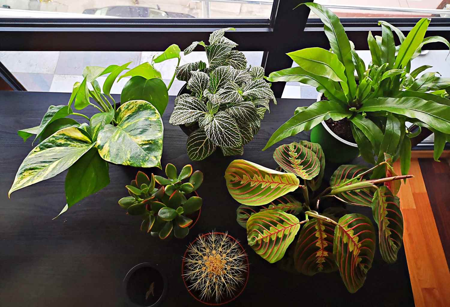 collection of offie plants for clean air
