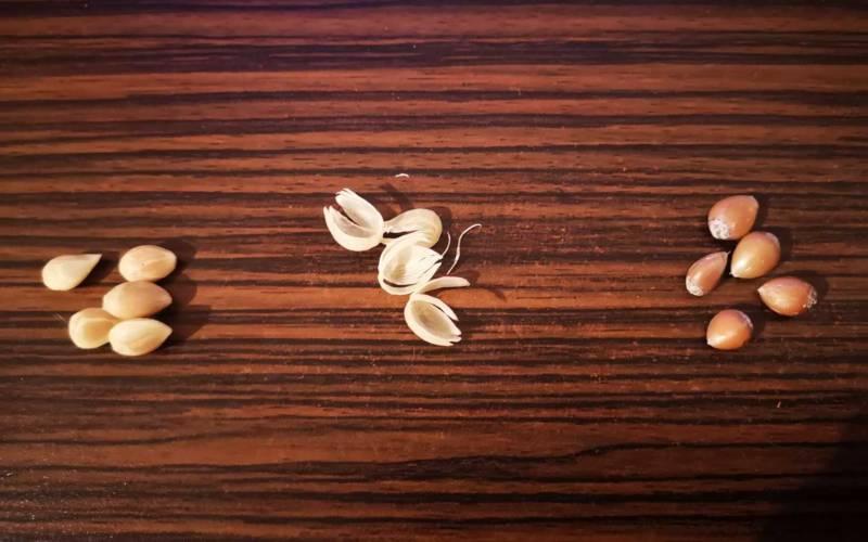 peeled off lemon seeds