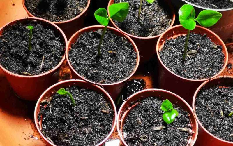 how to grow lemon tree from seeds - younglings