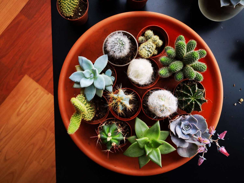 tray full of beautiful succulents