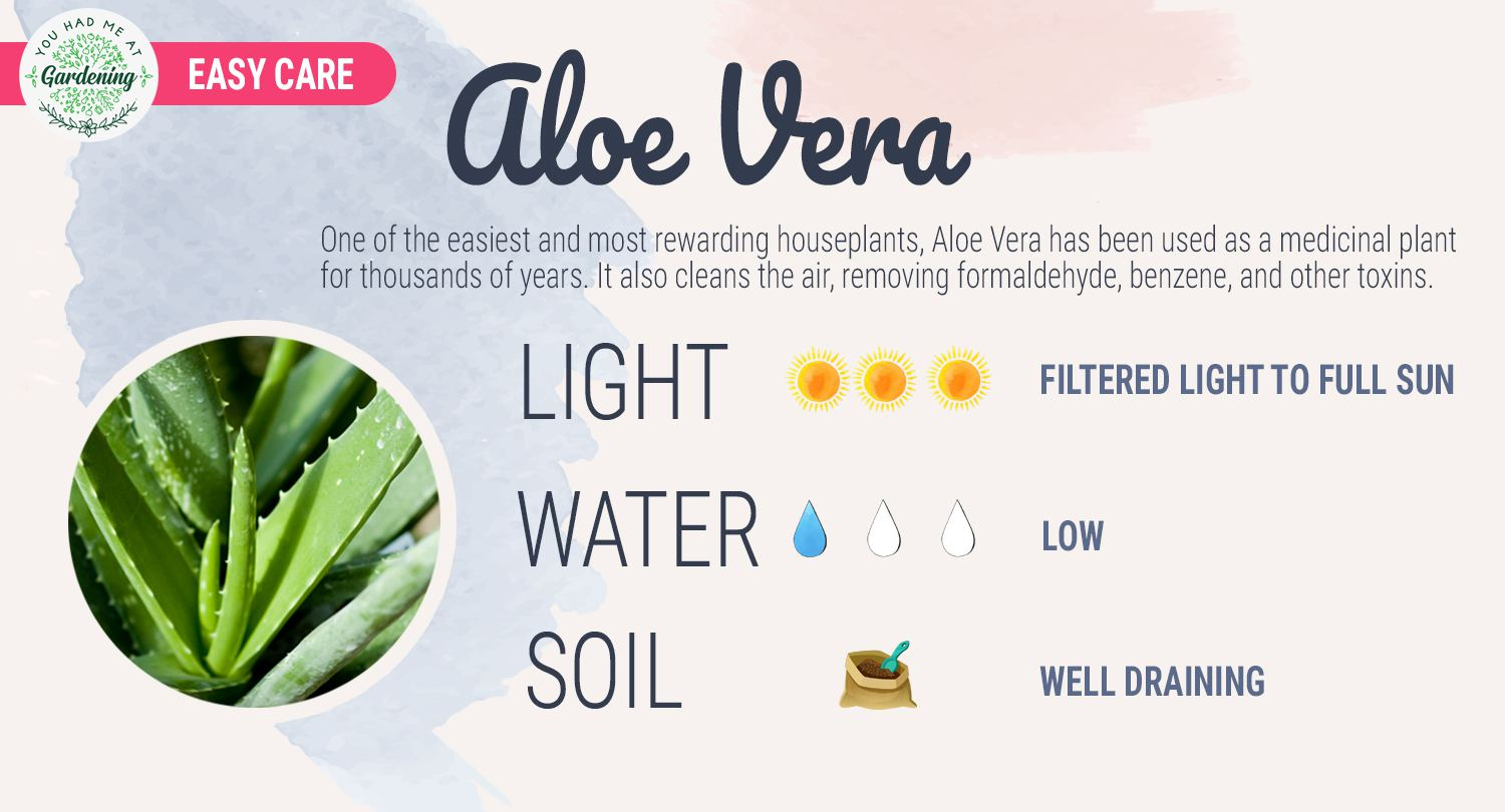 aloe vera plant care sheet