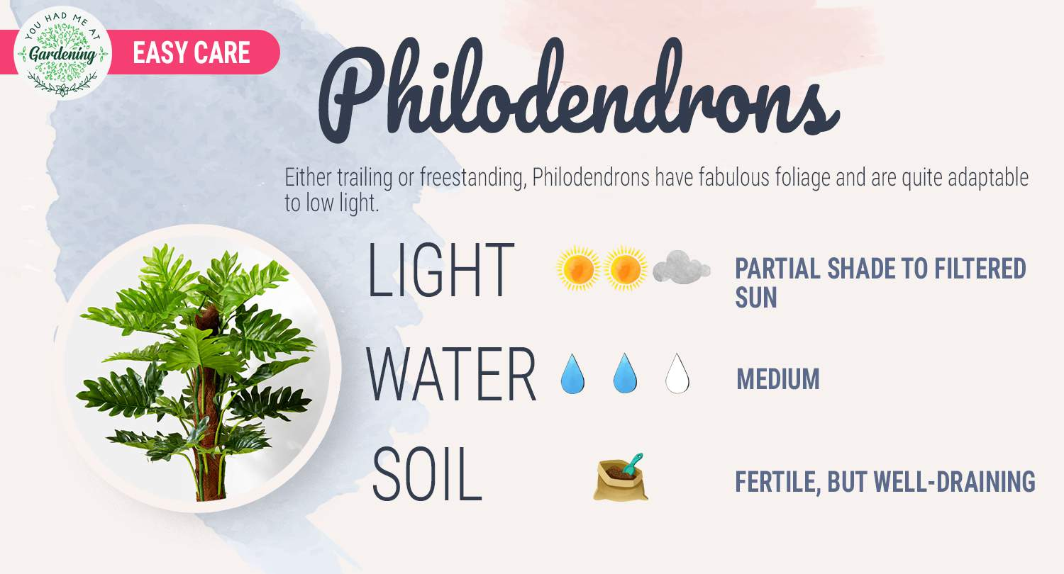 Philodendron care guide sheet