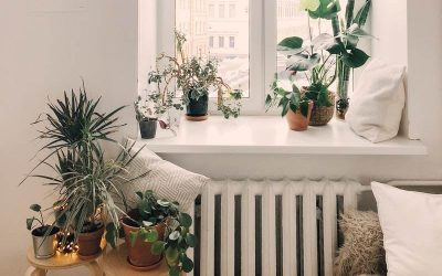 Home Office Plants You Had Me At Gardening