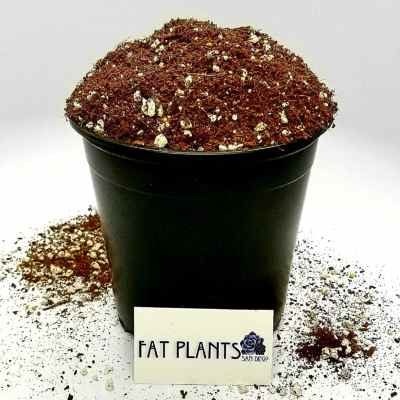 best soil for succulent care