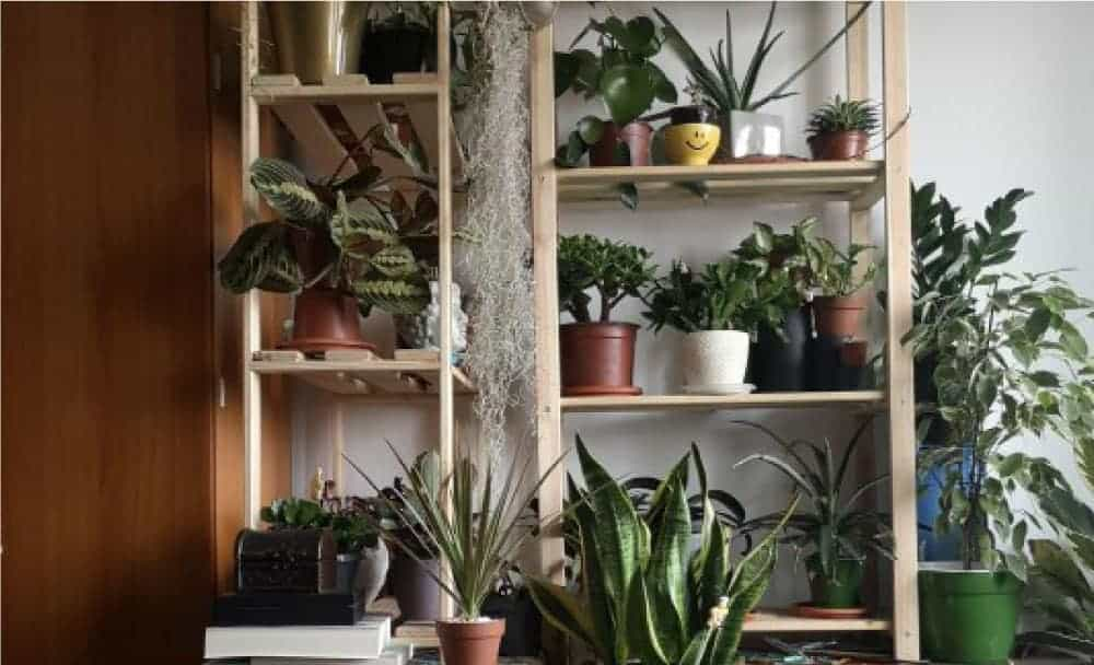 8 plants that clean the air on display