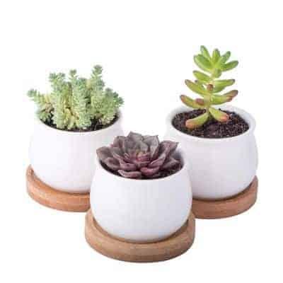 minimalistic white ceramic succulent pots