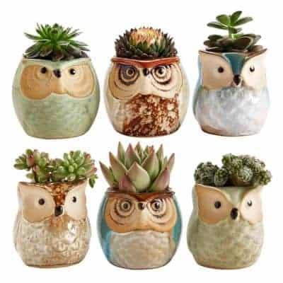 own ceramic pots for succulents