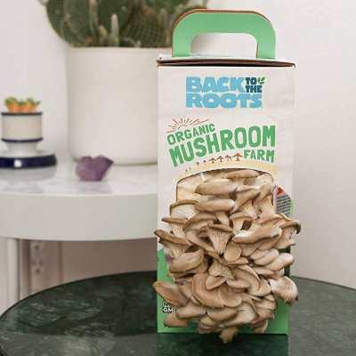 mushroom farm grow kit