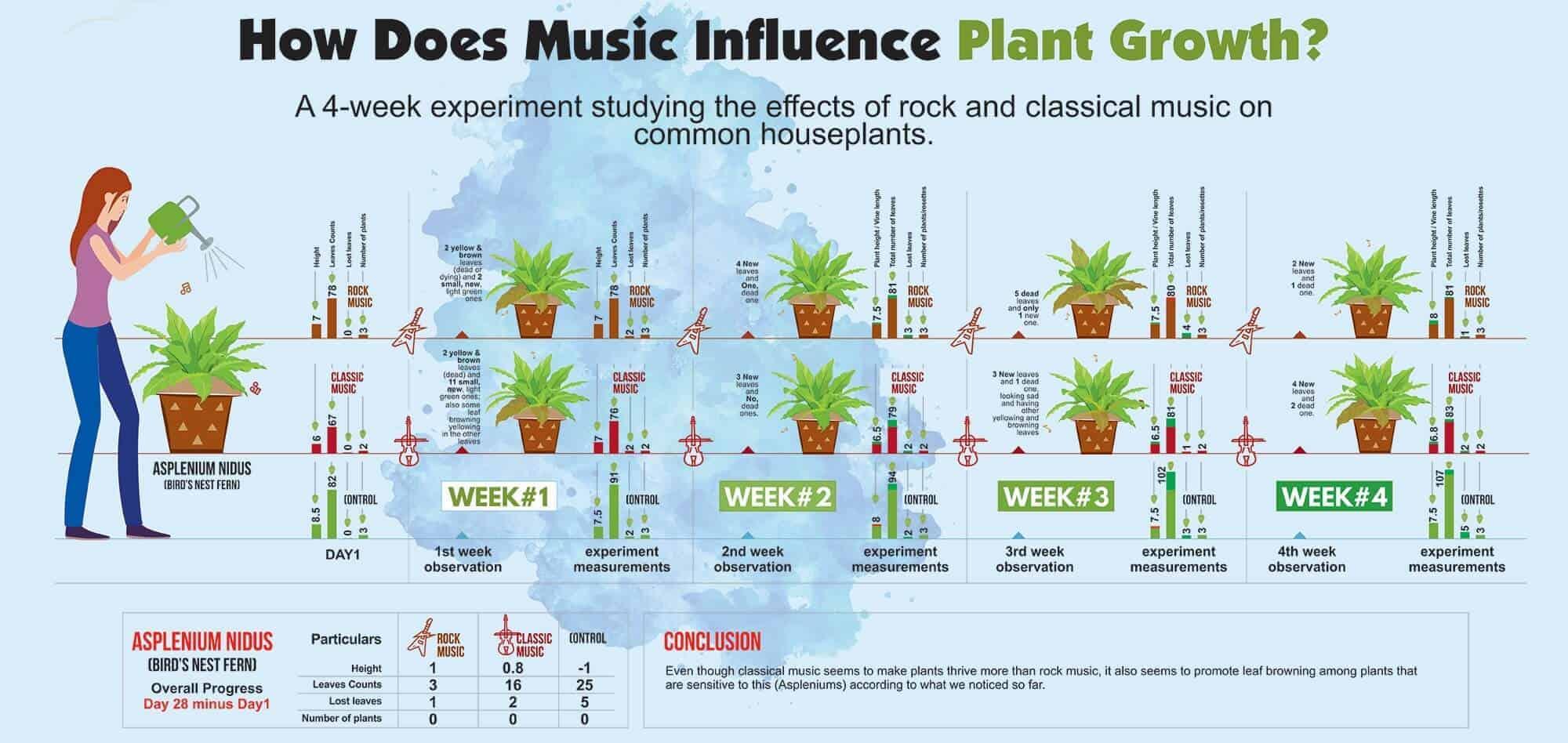 Music for plants experiment -Asplenium Nidus