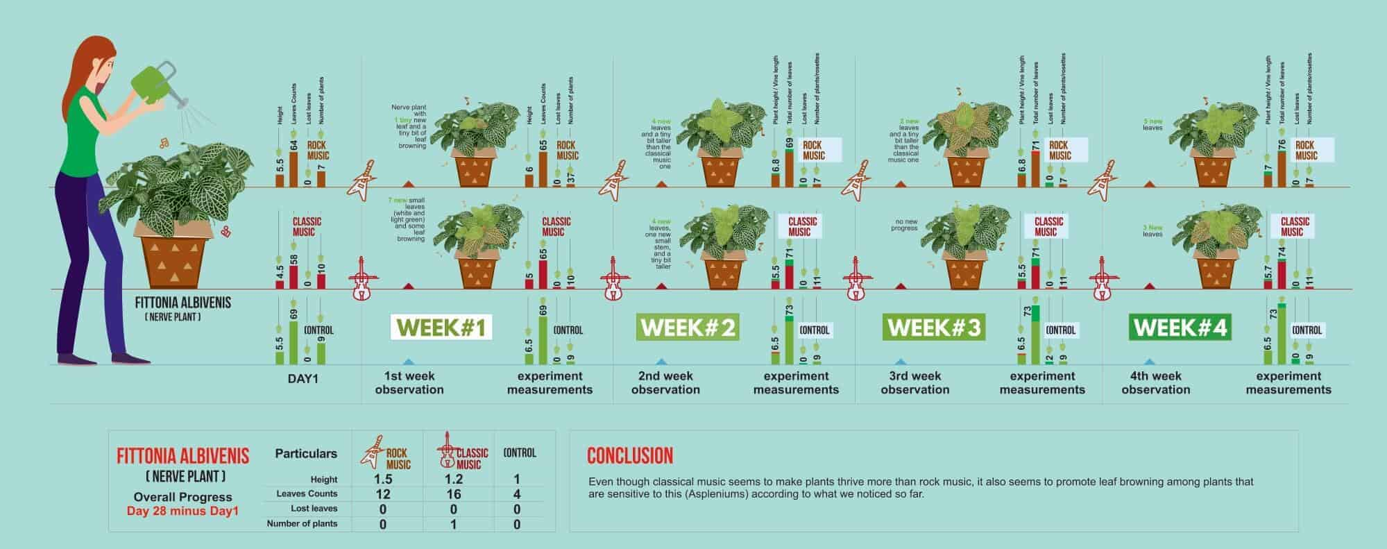 Music for plants experiment - Fittonia Albivenis
