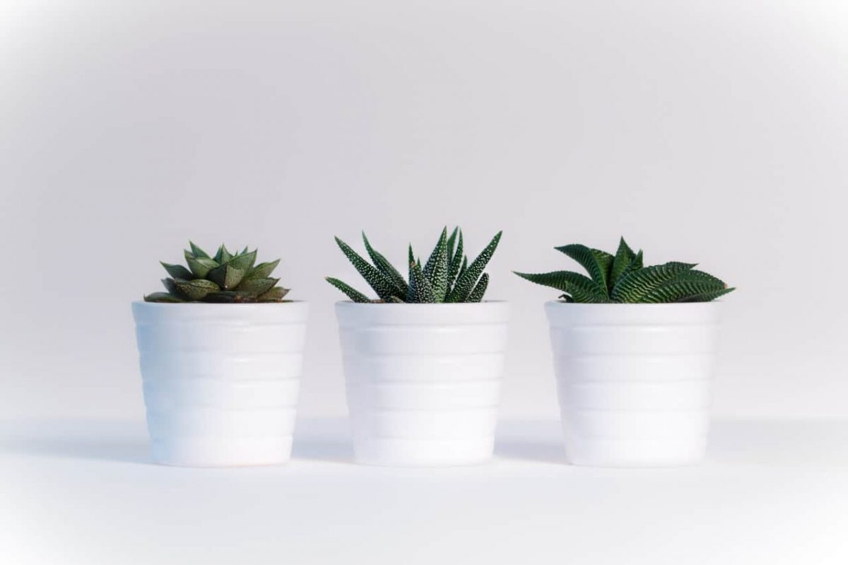 top 12 best self watering planters