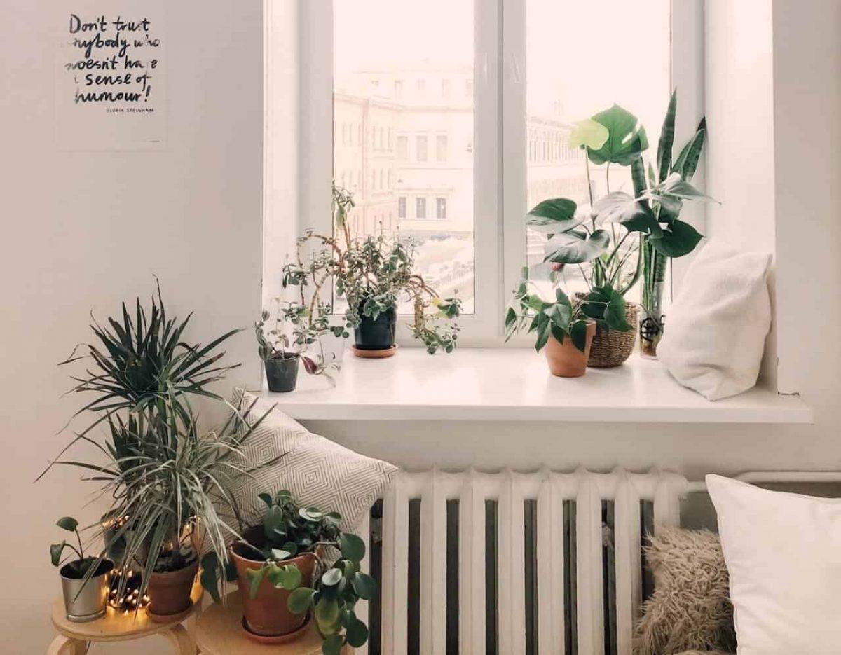 best plants for your bedroom