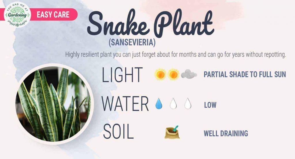 Snake Plant Care Sheet