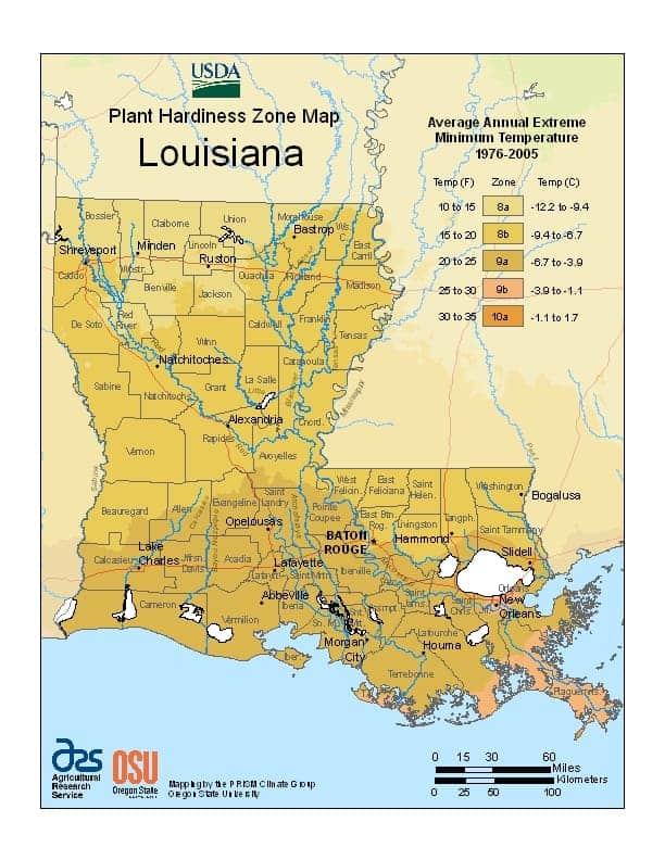 Louisiana USDA Zone Map