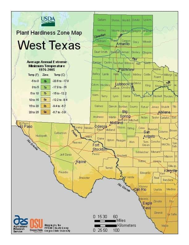 Western Texas