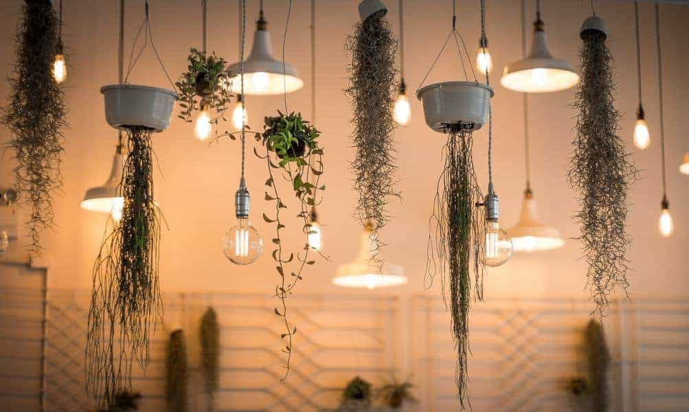 Plants hanging from the ceiling
