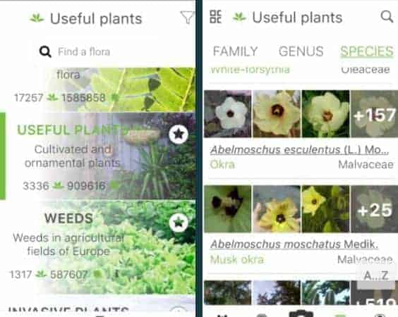 plantnet best plant identification app reviewed