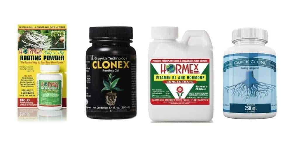 the best rooting hormones reviewed