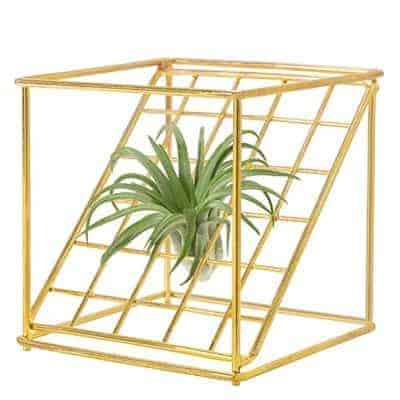 holder for air plants