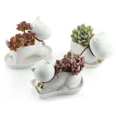 white ceramic succulent pots