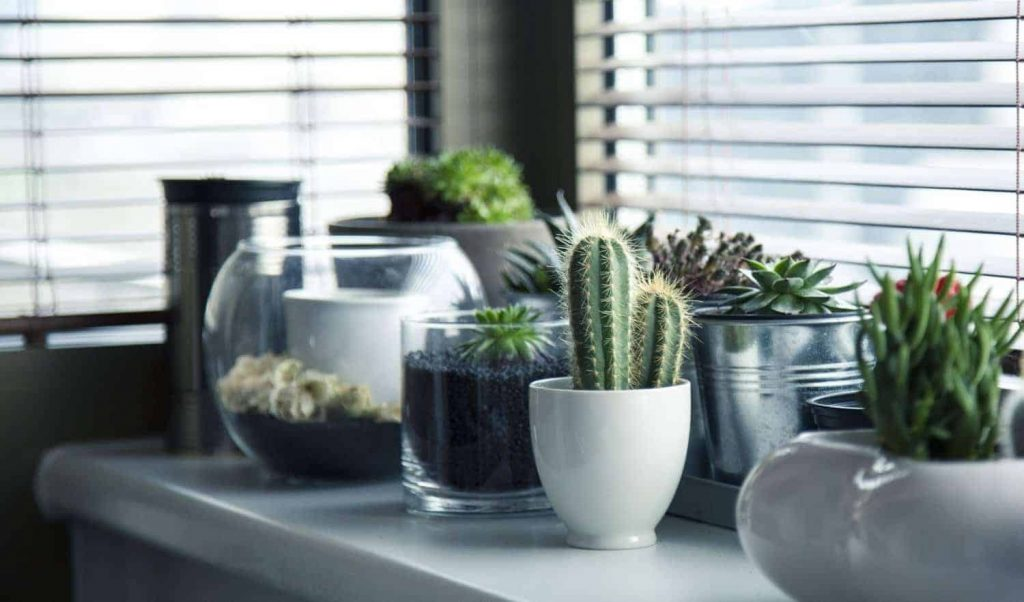 cacti and succulents in different pots