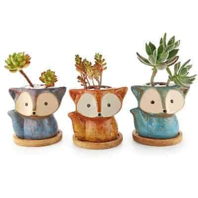fox succulent pot