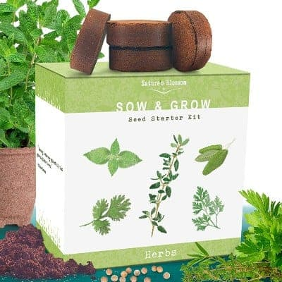 herbs seeds growing starter kit