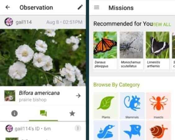 Plant identification app test iNaturalist