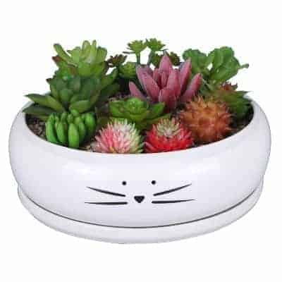 large succulent planter with cat face
